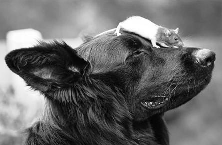 Il topolino e il cane
