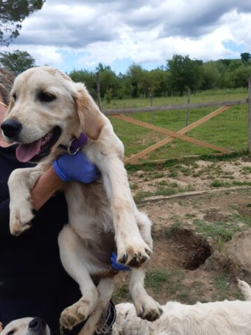 Sequestrato un cane preso a calci dal proprietario