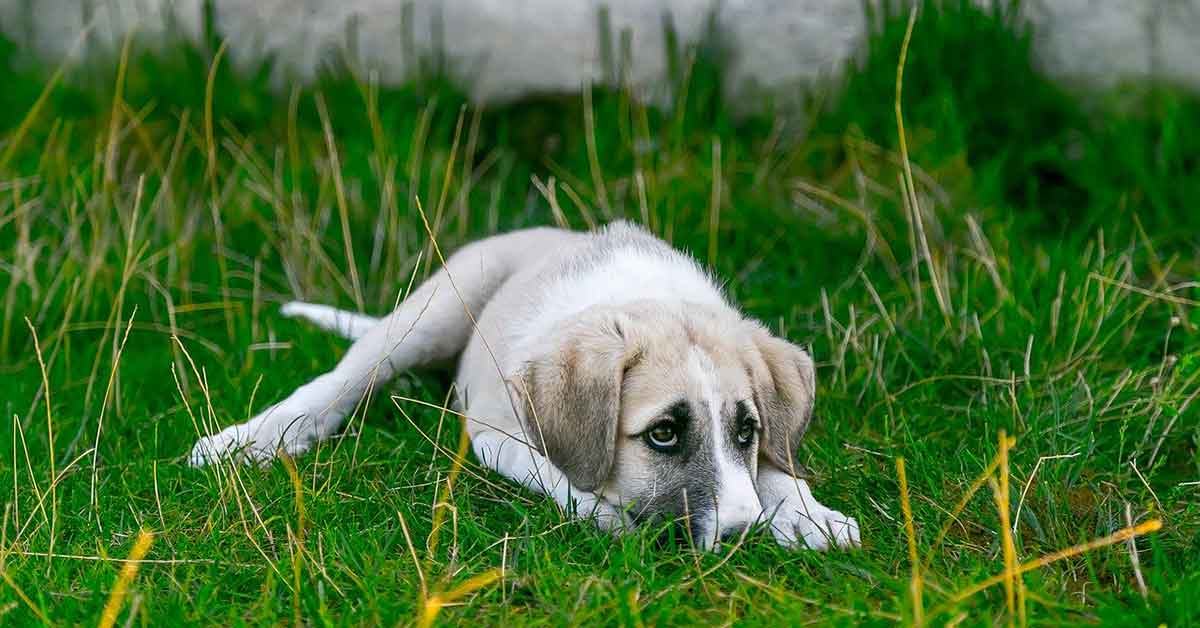 Cane in cerca di famiglia