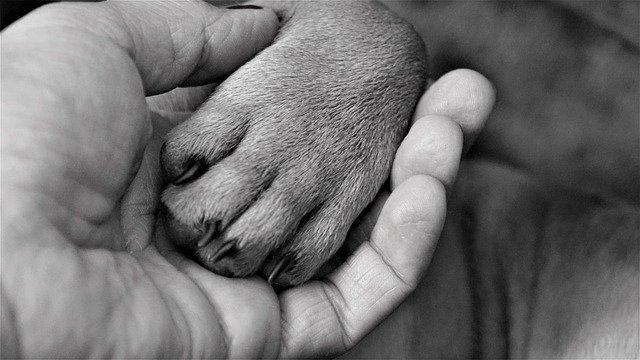 Malato terminale cerca casa per il cane