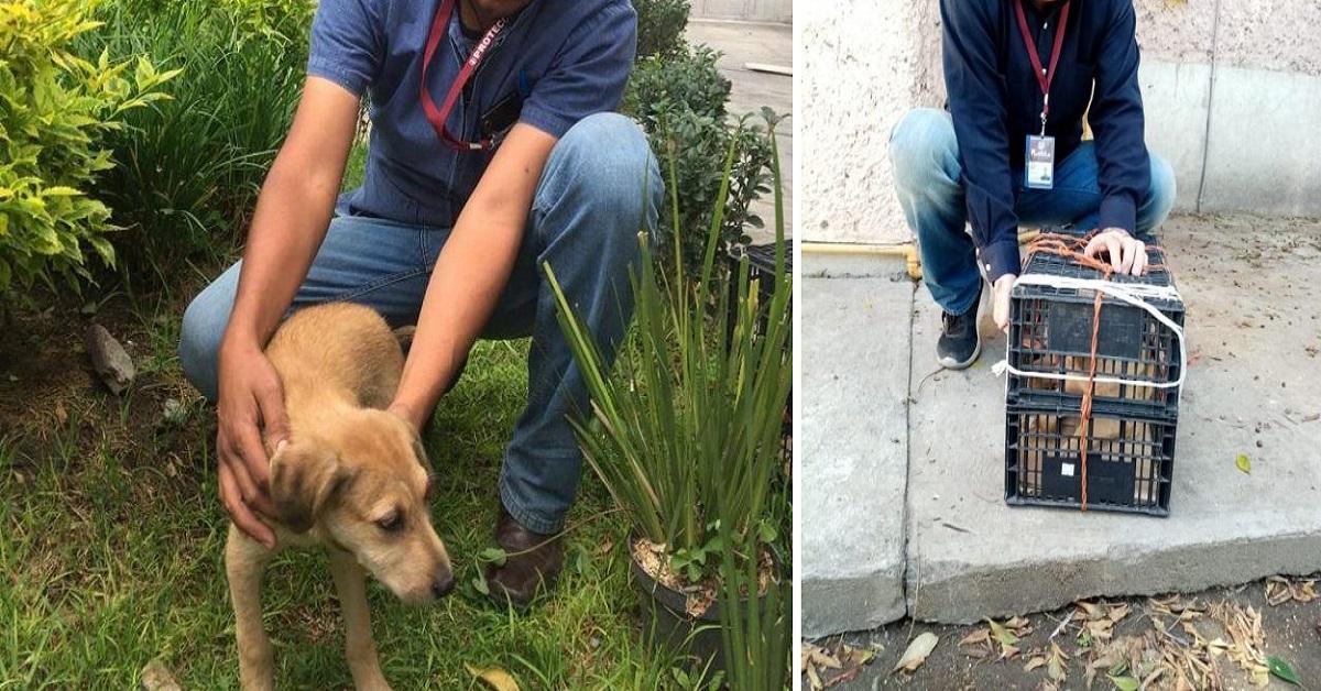 Cane abbandonato in una scatola