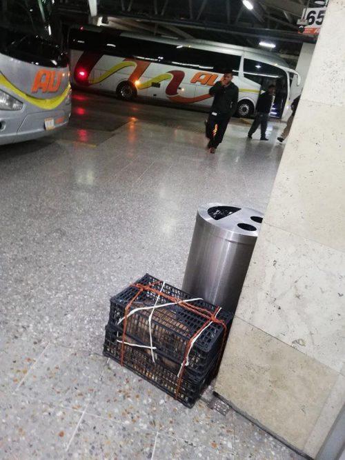 La scatola abbandonata nel terminal