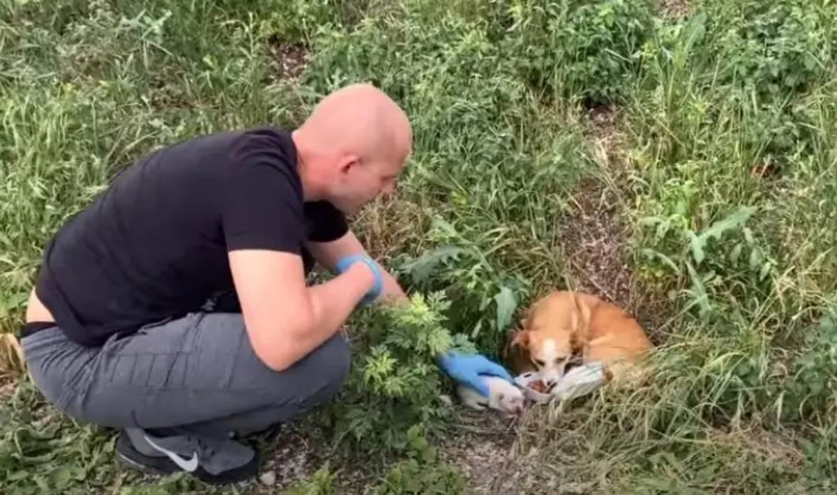 volontario salva la cagnolina