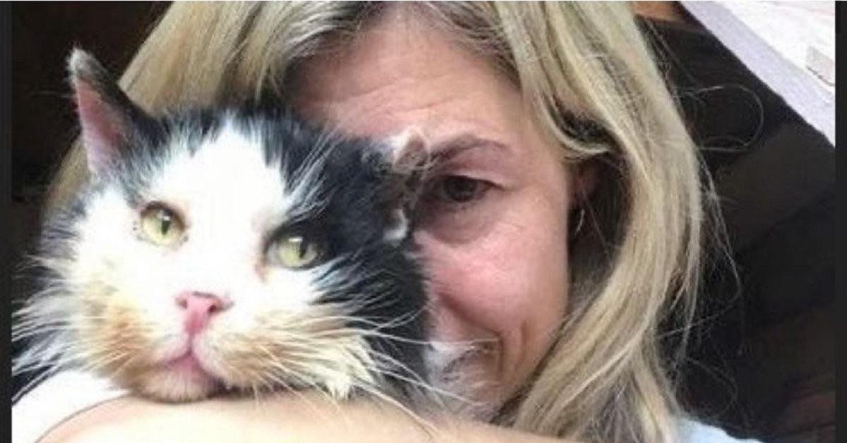 salvato gatto viveva in una siepe