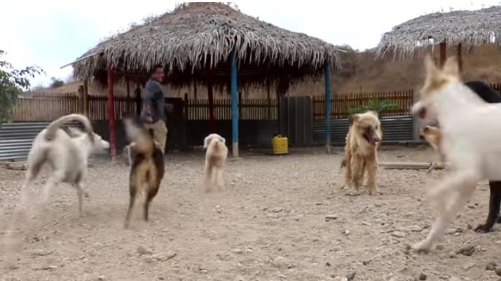 Il rifugio Esperanza Canina