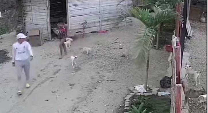 Cani abbandonati in strada