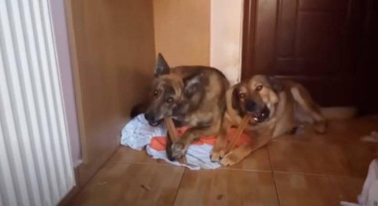 Il cane ha un nuovo amico
