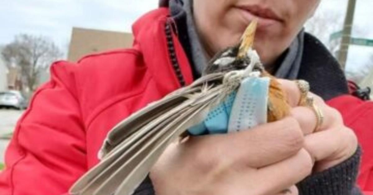 L'uccello è morto per colpa di una mascherina