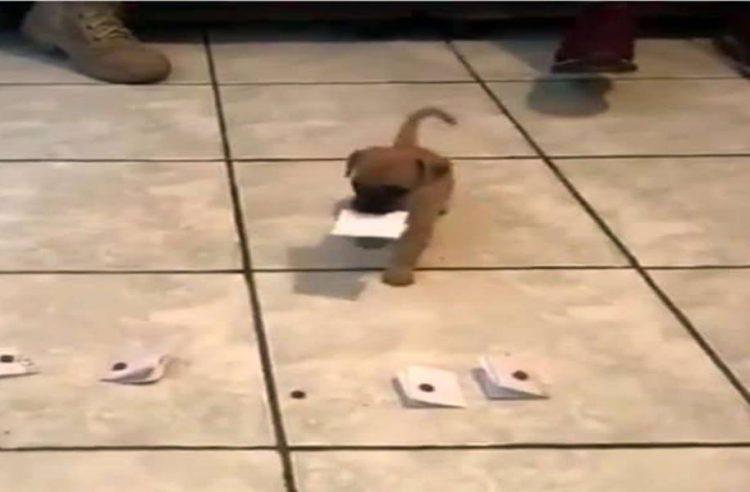 Bigliettini con il nome del cane