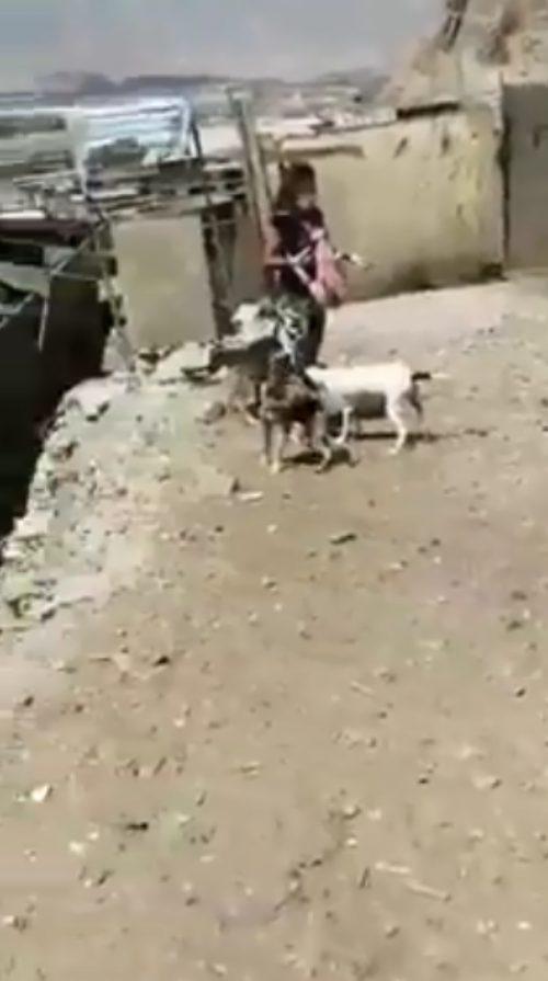 I cuccioli di Don Armando