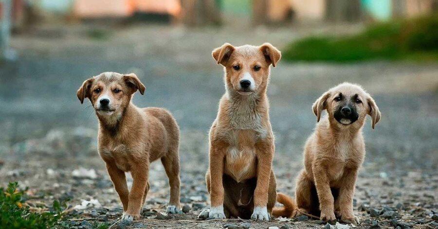 Vecchio si prende cura dei cuccioli
