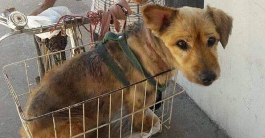 Cane in bici dal veterinario