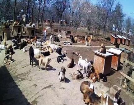 600 cani salvati