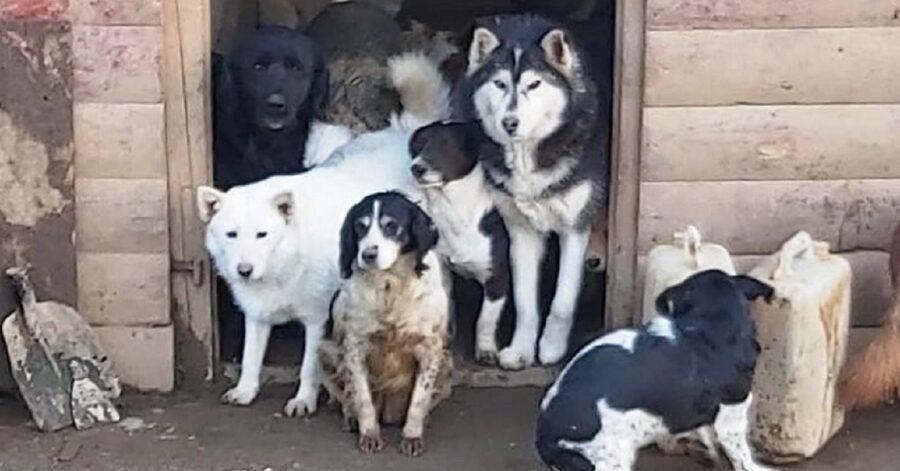 Cani randagi salvati dalla strada