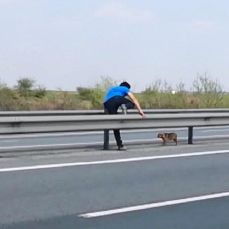 Uomo salva cane in autostrada