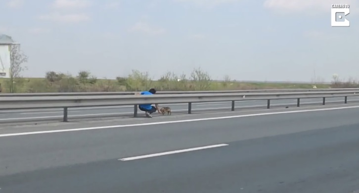 Cane in mezzo all'autostrada