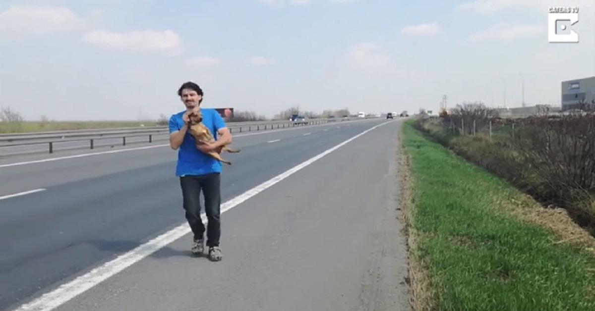 Uomo salva un cane abbandonato nell'autostrada trafficata