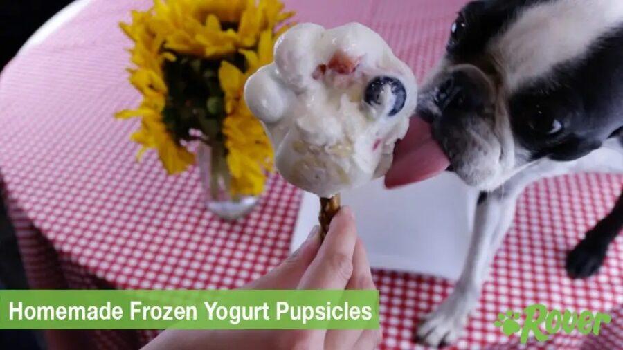 Gelato allo yogurt e frutta