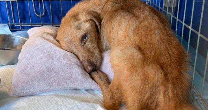 Il salvataggio di Bos, un cane con un solo destino: la morte