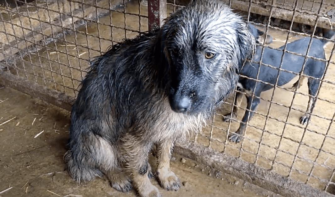 Abbandonato un cane sotto la pioggia