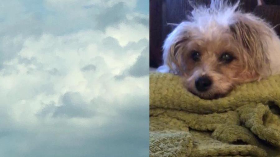 Lucy e il segno nel cielo