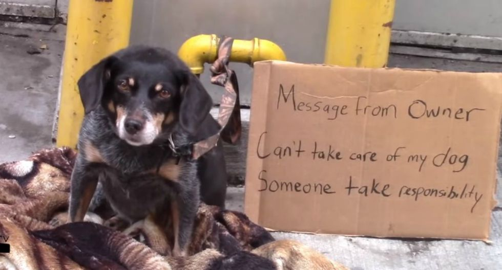 Matt Bandeira lascia cane in strada