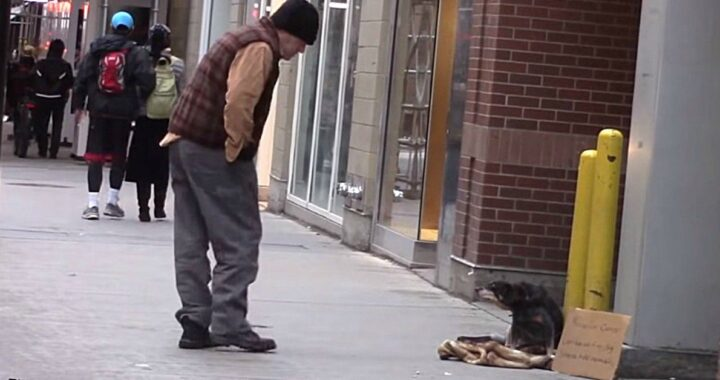 Matt Bandeira lascia un cane sulla strada: era un esperimento sociale