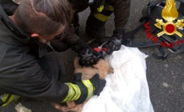 Roma vigili del fuoco salvano 10 cani