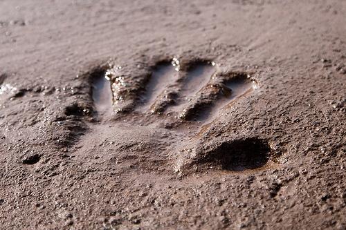 Impronta nel fango