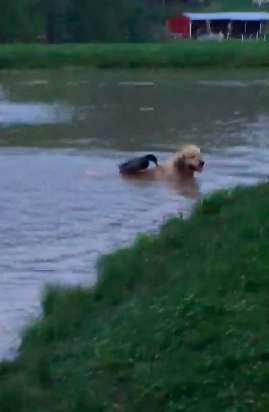 Il cane e l'anatra