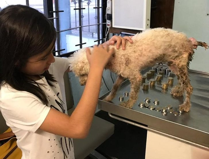 Victoria salva il cagnolino