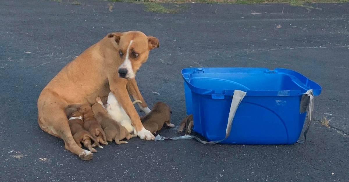 Il salvataggio di una cagnolina abbandonata con i suoi cuccioli (VIDEO)