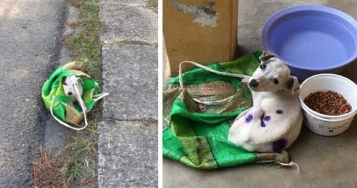Uomo trova cane abbandonato in un busta: lo ha salvato