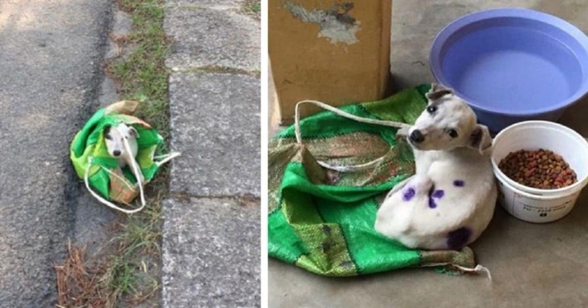 cane abbandonato dentro una busta