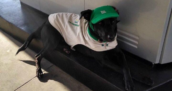 Cane adottato dai dipendenti della stazione di servizio