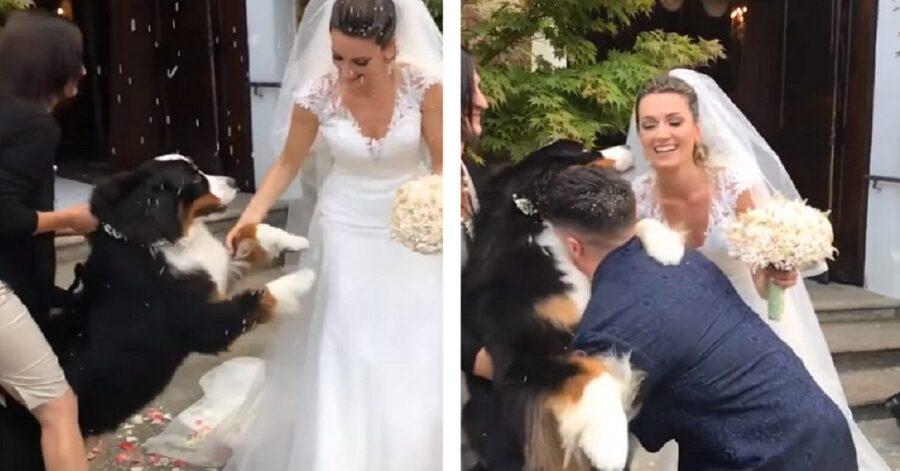 Cane aspetta gli sposi