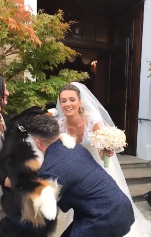 Cane abbraccia gli sposi