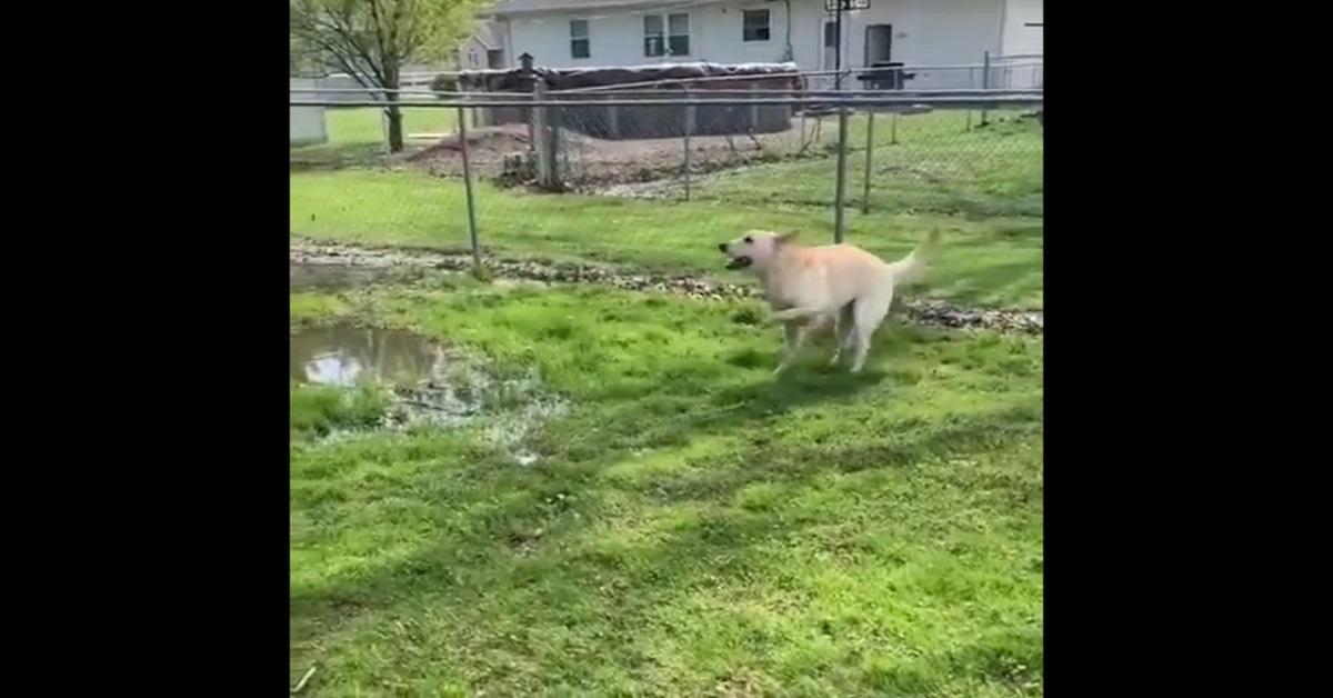 Cane cieco nella pozza d'acqua