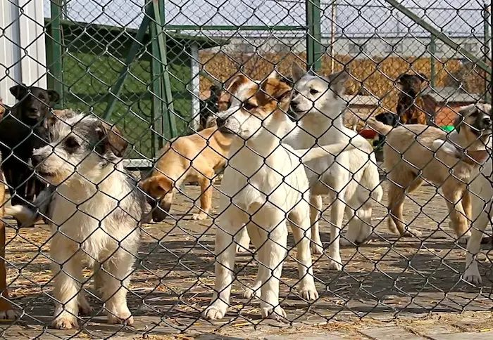 Cani abbandonati e soli