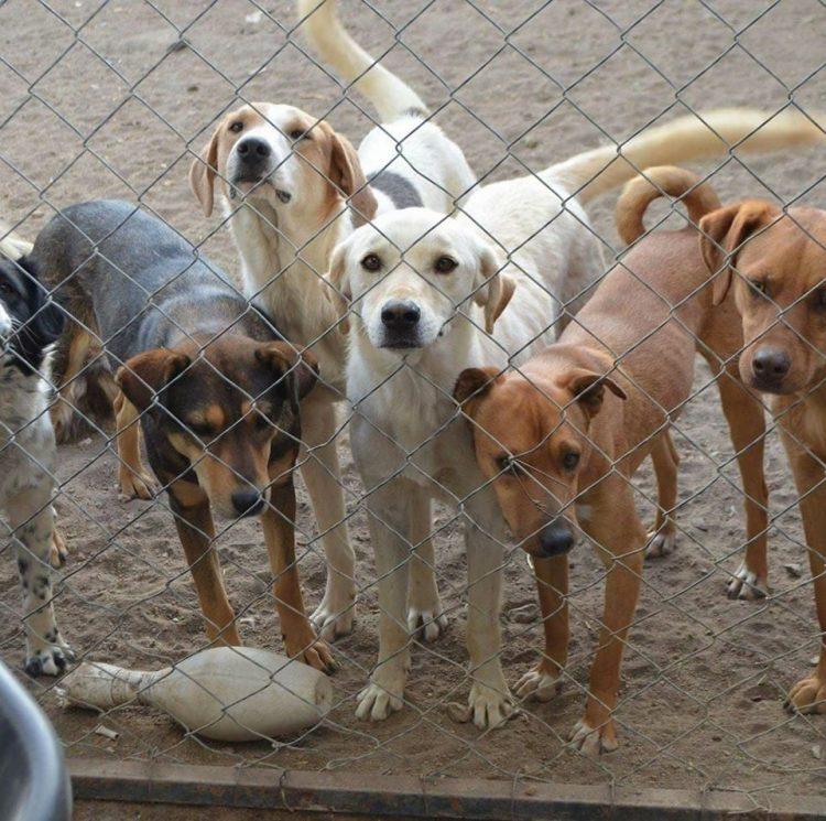 Cani nel rifugio