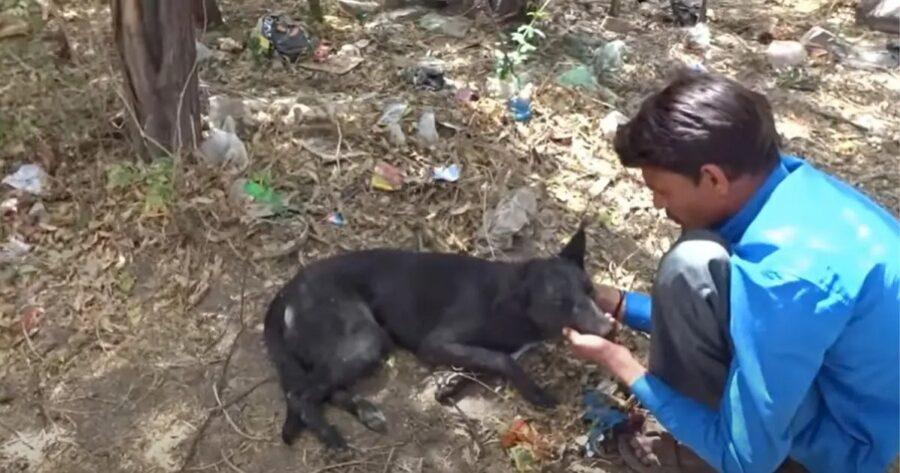 Cane di strada salvato