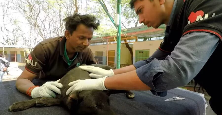 Volontari e cani randagi