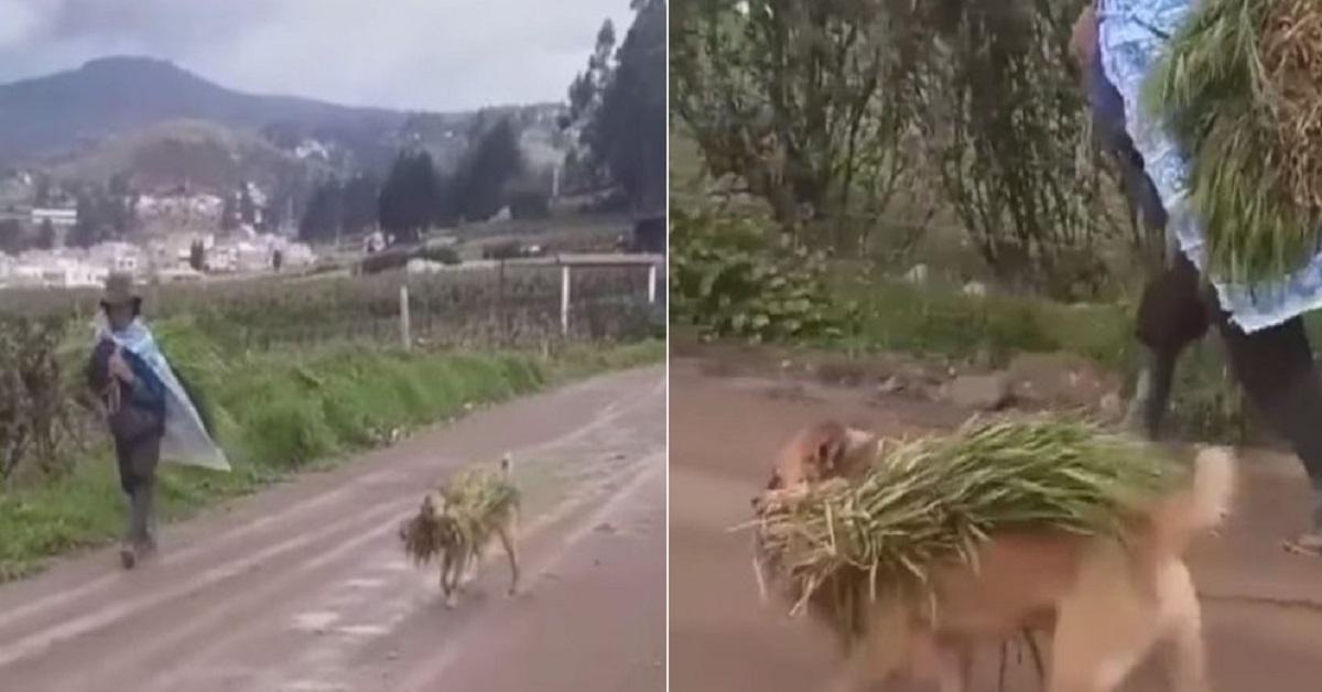 Cane fa il raccolto