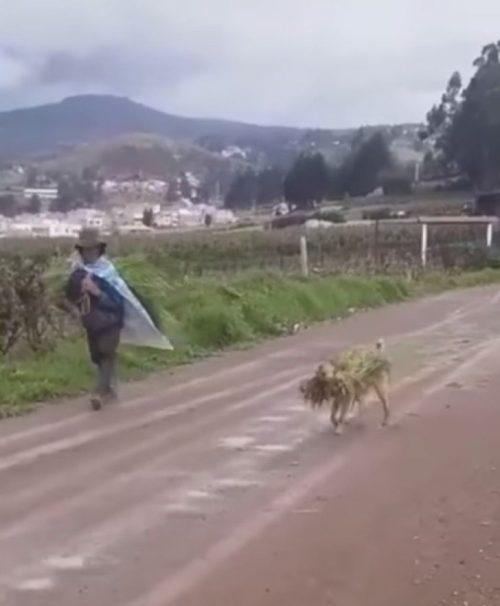 Il contadino e il cane