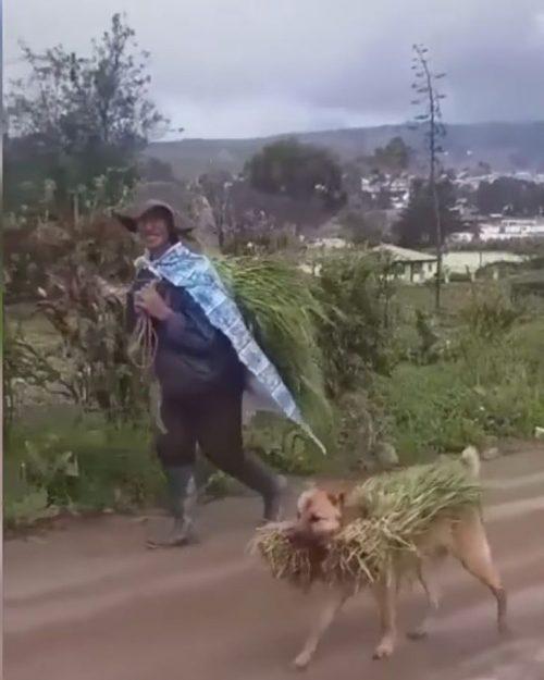Cucciolo porta il raccolto in bocca