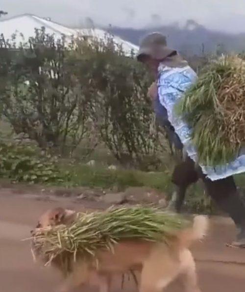 Cane con il raccolto in bocca