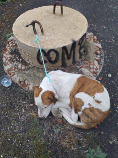 Cane lasciato in strada in Spagna