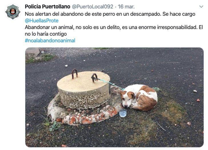 Cagnolina abbandonata in Spagna