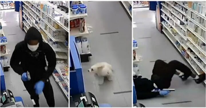 cane mette in fuga 2 ladri