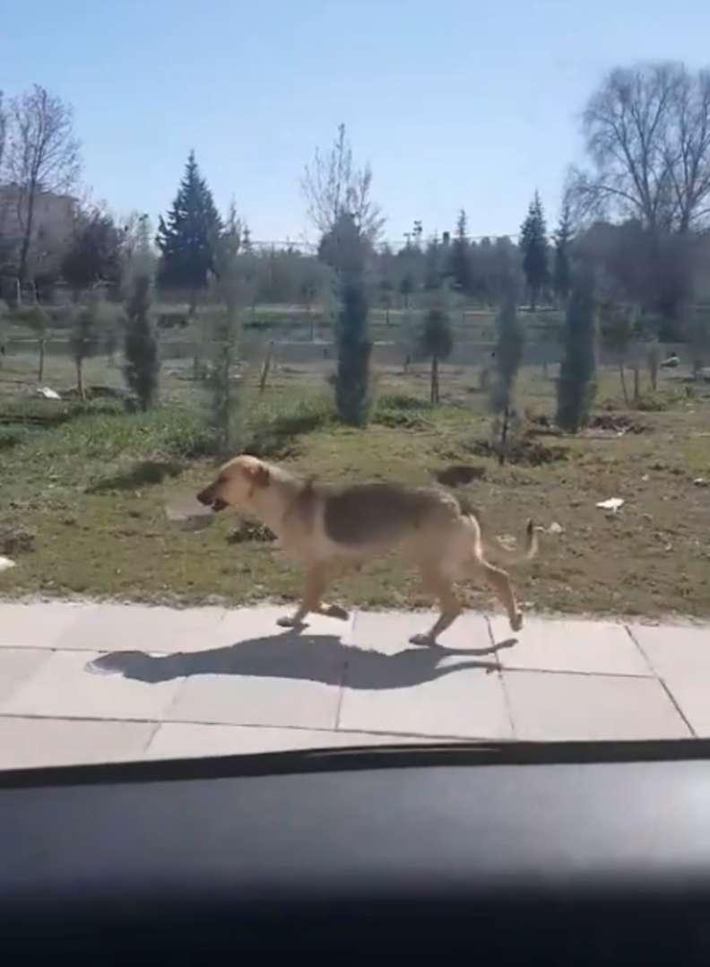 Il cane porta una ciotola